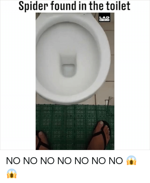 Memes, Spider, and Bible: Spider found in the toilet  LAD  BIBLE NO NO NO NO NO NO NO 😱😱