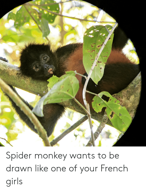 spider monkey: Spider monkey wants to be drawn like one of your French girls