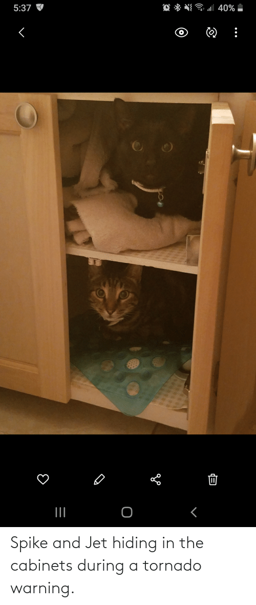 Tornado Warning: Spike and Jet hiding in the cabinets during a tornado warning.