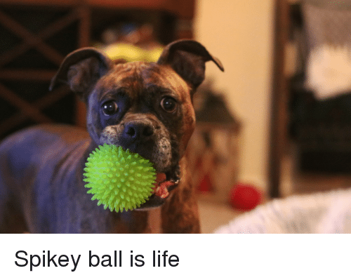 ball is life: Spikey ball is life