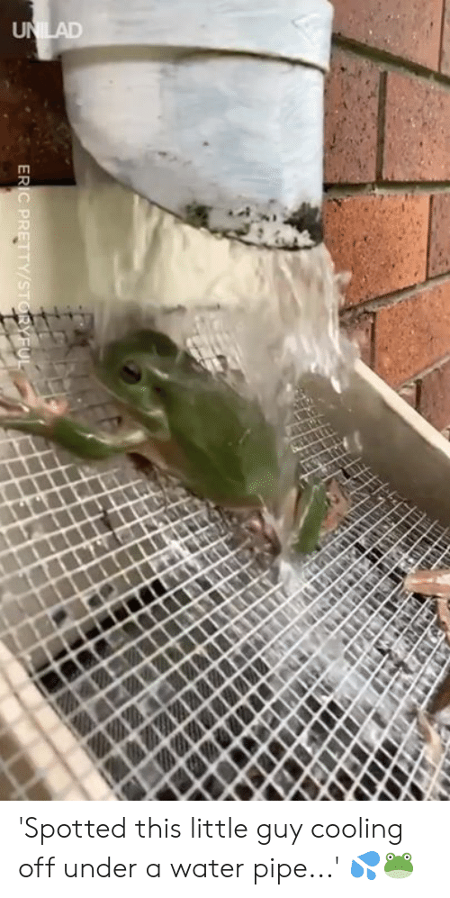 water pipe: 'Spotted this little guy cooling off under a water pipe...' 💦🐸