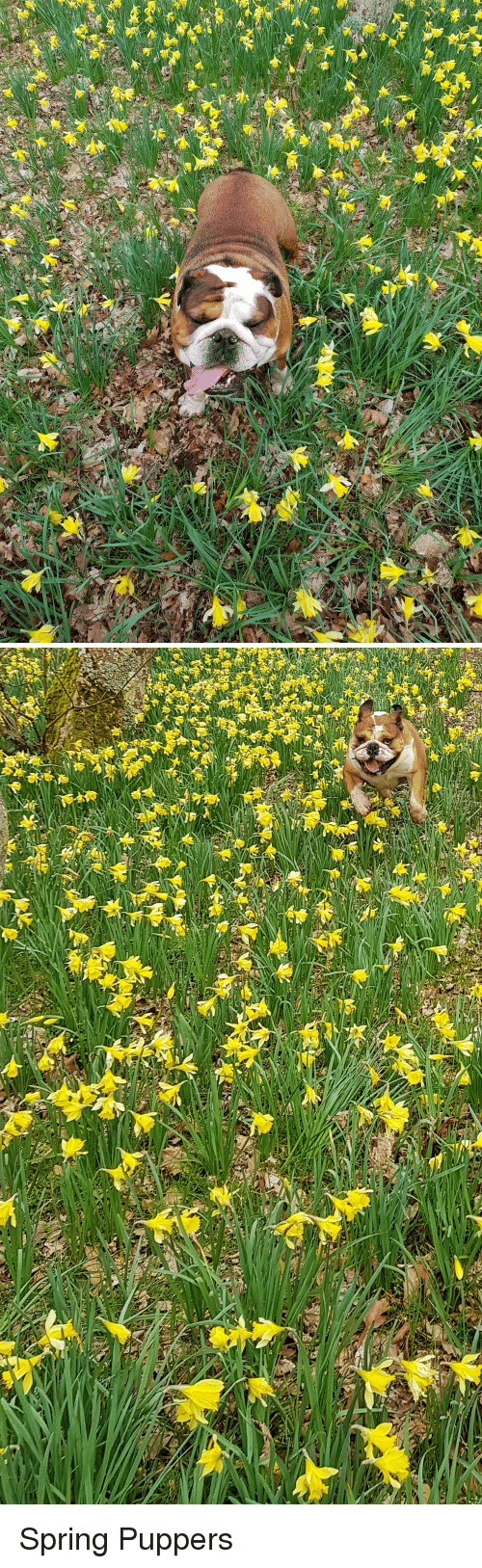 Spring and Puppers: Spring Puppers