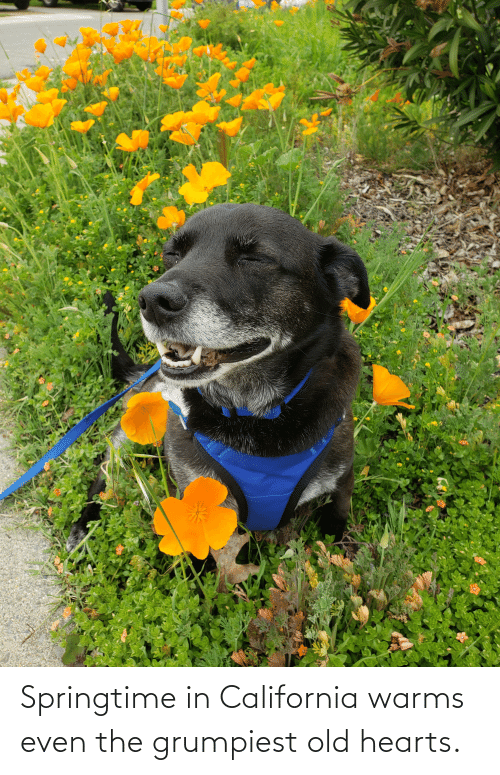 Springtime: Springtime in California warms even the grumpiest old hearts.