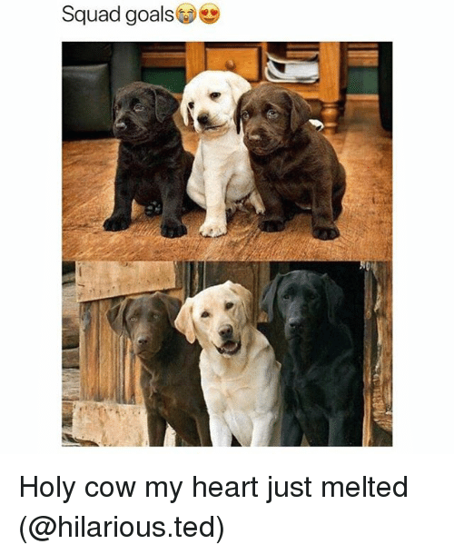 Funny, Goals, and Squad: Squad goals Holy cow my heart just melted (@hilarious.ted)