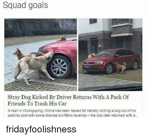 Memes, Revenge, and 🤖: Squad goals  Stray Dog Kicked By Driver Returns With A Pack of  Friends To Trash His Car  A man in Chongquing, China has been repaid for literally kicking a dog outofhis  parking spot with some strange but fittina revenge-the doa later returned with a... fridayfoolishness