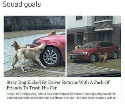 Squad Goal: Squad goals  Stray Dog Kicked By Driver Returns With APack Of  Friends To Trash His Car  A man in Chongquing, China has been repaid for literally kicking a dog out of his  parking spot with some strange but fittina revenae-the dog later returned with a