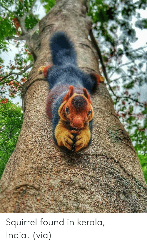 Squirrel: Squirrel found in kerala, India. (via)