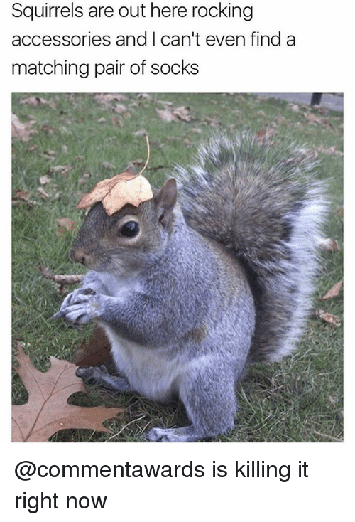 Funny, Girl Memes, and Now: Squirrels are out here rocking  accessories and I can't even find a  matching pair of socks @commentawards is killing it right now