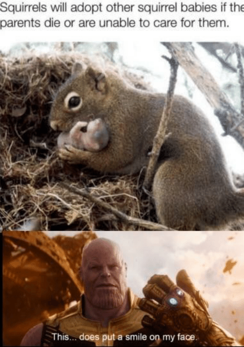 squirrels: Squirrels will adopt other squirrel babies if the  parents die or are unable to care for them  This... does put a smile on my face