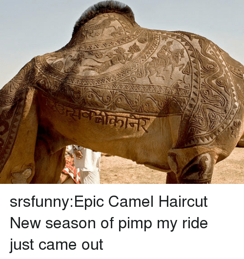 Pimp: srsfunny:Epic Camel Haircut  New season of pimp my ride just came out