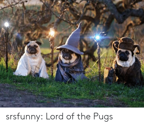Pugs: srsfunny:  Lord of the Pugs