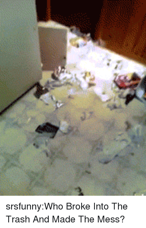 Into The Trash: srsfunny:Who Broke Into The Trash And Made The Mess?