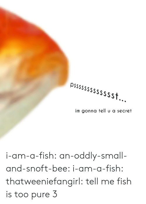 Too Pure: Sst  im gonna tell u a secret i-am-a-fish:  an-oddly-small-and-snoft-bee:  i-am-a-fish:  thatweeniefangirl:  tell me    fish is too pure 3
