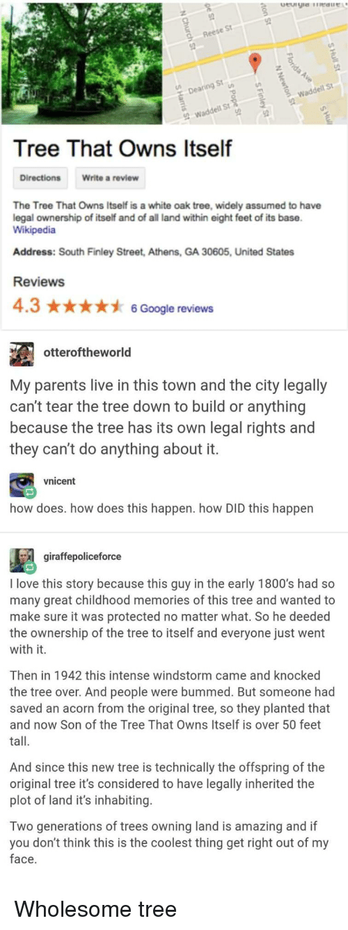 Google, Love, and Parents: St  Rees  9  St  De  wadde  St  Tree That Owns Itself  Directions  Write a review  The Tree That Owns Itself is a white oak tree, widely assumed to have  legal ownership of itself and of all land within eight feet of its base  Wikipedia  Address: South Finley Street, Athens, GA 30605, United States  Reviews  4.36 Google reviews  otteroftheworld  My parents live in this town and the city legally  can't tear the tree down to build or anything  because the tree has its own legal rights and  they can't do anything about it  vnicent  how does. how does this happen. how DID this happen  gíraffepoliceforce  I love this story because this guy in the early 1800's had so  many great childhood memories of this tree and wanted to  make sure it was protected no matter what. So he deeded  the ownership of the tree to itself and everyone just went  with it.  Then in 1942 this intense windstorm came and knocked  the tree over. And people were bummed. But someone had  saved an acorn from the original tree, so they planted that  and now Son of the Tree That Owns Itself is over 50 feet  tall.  And since this new tree is technically the offspring of the  original tree it's considered to have legally inherited the  plot of land it's inhabiting.  Two generations of trees owning land is amazing and if  you don't think this is the coolest thing get right out of my  face Wholesome tree