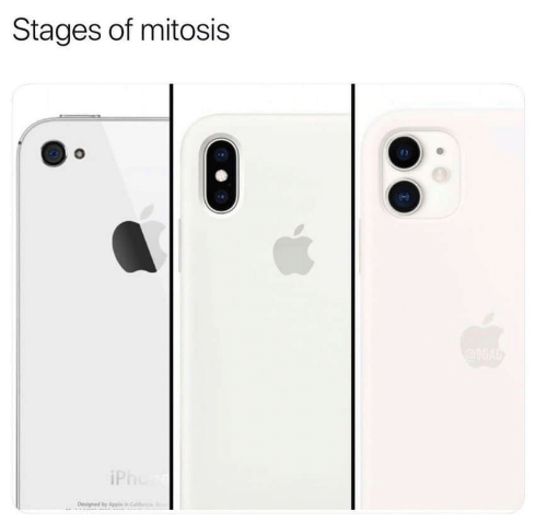 apr: Stages of mitosis  iPh  Designed by Apr