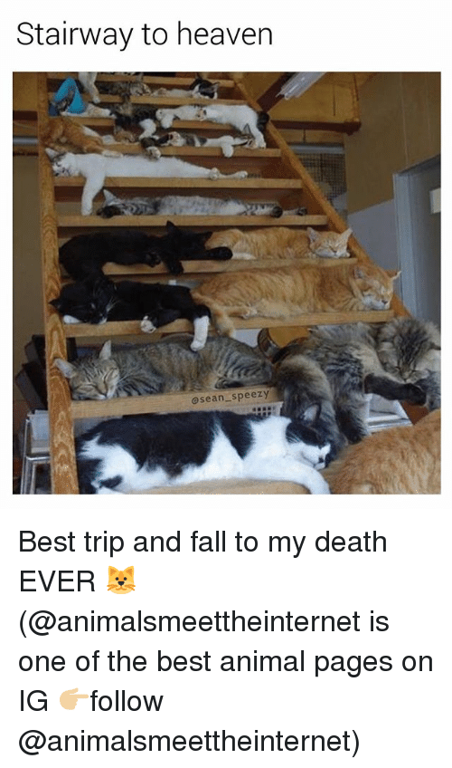 Fall, Heaven, and Memes: Stairway to heaven  osean speezy Best trip and fall to my death EVER 🐱 (@animalsmeettheinternet is one of the best animal pages on IG 👉🏼follow @animalsmeettheinternet)