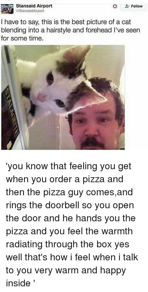 That Feeling You Get: Stansaid Airport  Follow  I have to say, this is the best picture of a cat  blending into a hairstyle and forehead I've seen  for some time. 'you know that feeling you get when you order a pizza and then the pizza guy comes,and rings the doorbell so you open the door and he hands you the pizza and you feel the warmth radiating through the box yes well that's how i feel when i talk to you very warm and happy inside '