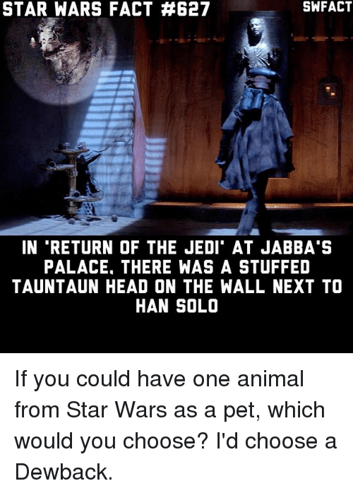 tauntaun: STAR WARS FACT #627  IN RETURN OF THE JEDI' AT JABBA'S  PALACE. THERE WAS A STUFFED  TAUNTAUN HEAD ON THE WALL NEXT TO  HAN SOLO If you could have one animal from Star Wars as a pet, which would you choose? I'd choose a Dewback.