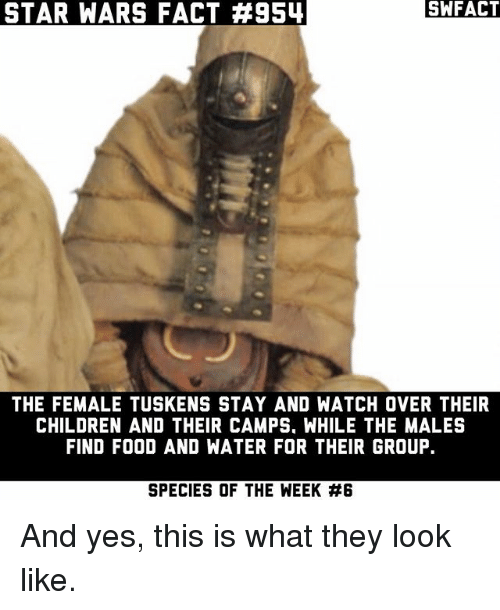 Children, Food, and Memes: STAR WARS FACT #954  SWFACT  THE FEMALE TUSKENS STAY AND WATCH OVER THEIR  CHILDREN AND THEIR CAMPS. WHILE THE MALES  FIND FOOD AND WATER FOR THEIR GROUP.  SPECIES OF THE WEEK And yes, this is what they look like.