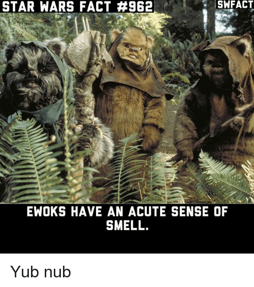 Memes, Smell, and Star Wars: STAR WARS FACT #962  SWFACT  EWOKS HAVE AN ACUTE SENSE OF  SMELL Yub nub