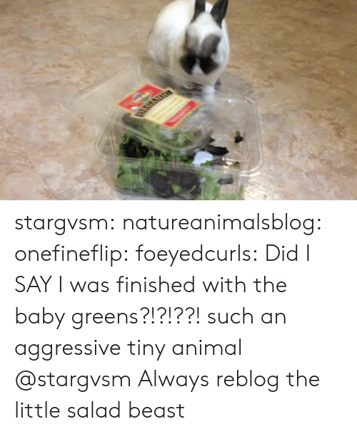 Greens: stargvsm:  natureanimalsblog:  onefineflip: foeyedcurls:  Did I SAY I was finished with the baby greens?!?!??!  such an aggressive tiny animal   @stargvsm   Always reblog the little salad beast