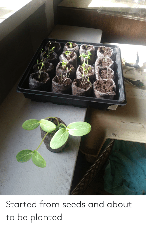 seeds: Started from seeds and about to be planted