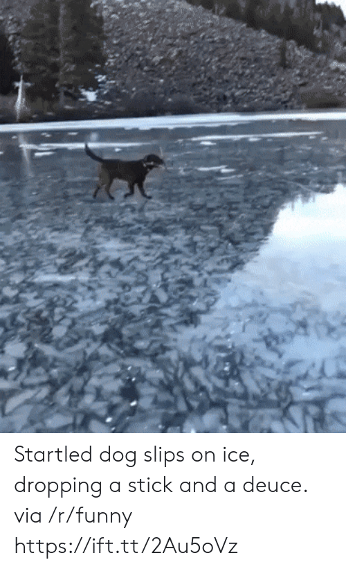 startled: Startled dog slips on ice, dropping a stick and a deuce. via /r/funny https://ift.tt/2Au5oVz