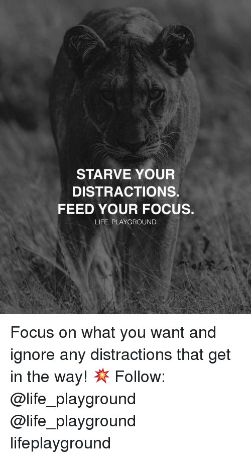 Life, Memes, and Focus: STARVE YOUR  DISTRACTION  FEED YOUR FOCUS.  LIFE PLAYGROUND Focus on what you want and ignore any distractions that get in the way! 💥 Follow: @life_playground @life_playground lifeplayground