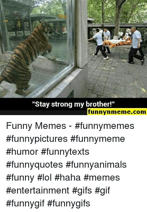 """Funnymeme: """"Stay strong my brother!""""  funnynmeme.com Funny Memes - #funnymemes #funnypictures #funnymeme #humor #funnytexts #funnyquotes #funnyanimals #funny #lol #haha #memes #entertainment #gifs #gif #funnygif #funnygifs"""