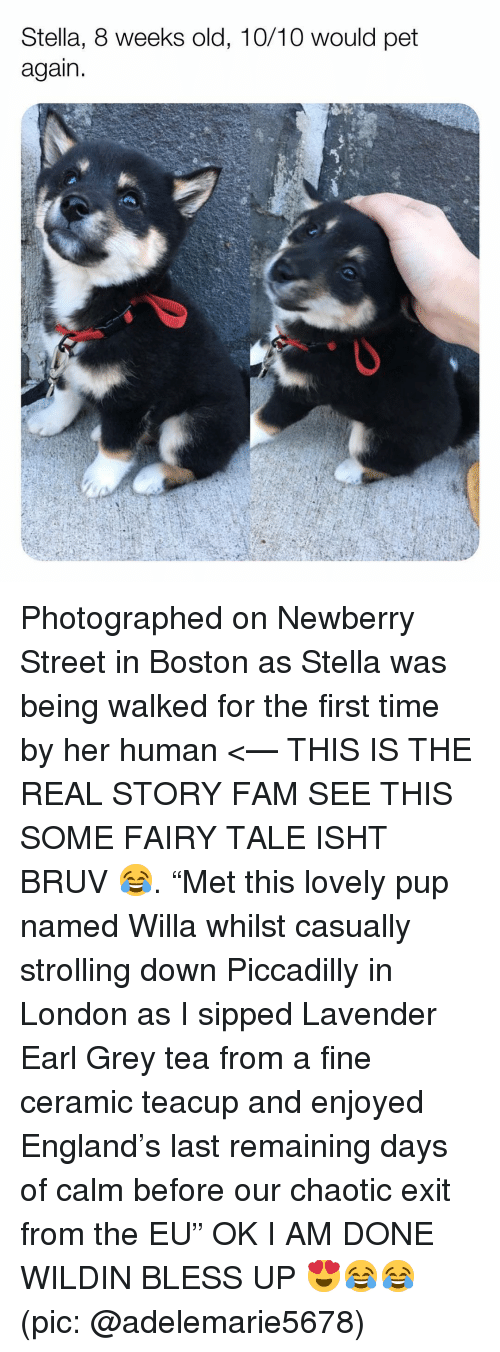 "fairy tale: Stella, 8 weeks old, 10/10 would pet  again Photographed on Newberry Street in Boston as Stella was being walked for the first time by her human <— THIS IS THE REAL STORY FAM SEE THIS SOME FAIRY TALE ISHT BRUV 😂. ""Met this lovely pup named Willa whilst casually strolling down Piccadilly in London as I sipped Lavender Earl Grey tea from a fine ceramic teacup and enjoyed England's last remaining days of calm before our chaotic exit from the EU"" OK I AM DONE WILDIN BLESS UP 😍😂😂 (pic: @adelemarie5678)"