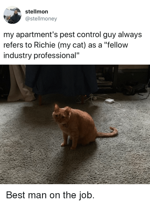 "pest: stellmon  @stellmoney  my apartment's pest control guy always  refers to Richie (my cat) as a ""fellow  industry professional"" Best man on the job."