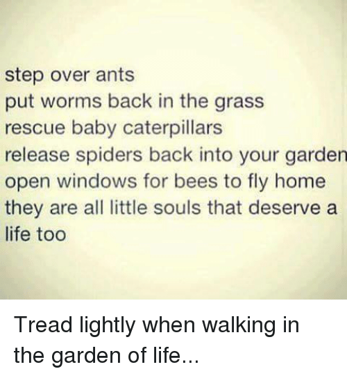 Memes, Spider, and Windows: step over ants  put worms back in the grass  rescue baby caterpillars  release spiders back into your garden  open windows for bees to fly home  they are all little souls that deserve a  life too Tread lightly when walking in the garden of life...