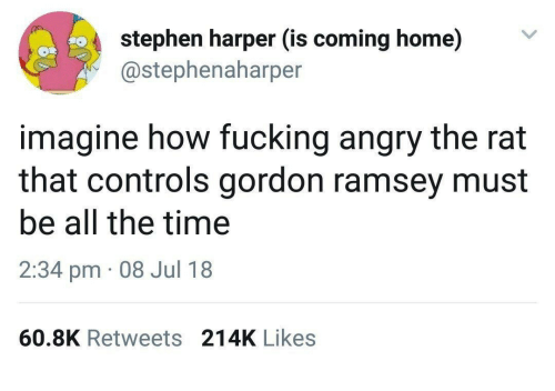 gordon ramsey: stephen harper (is coming home)V  @stephenaharper  imagine how fucking angry the rat  that controls gordon ramsey must  be all the time  2:34 pm 08 Jul 18  60.8K Retweets 214K Likes