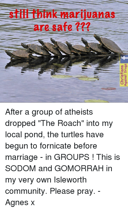 """memes: stiffithink marijuanas  are safe After a group of atheists dropped """"The Roach"""" into my local pond, the turtles have begun to fornicate before marriage - in GROUPS !   This is SODOM and GOMORRAH in my very own Isleworth community. Please pray. - Agnes x"""