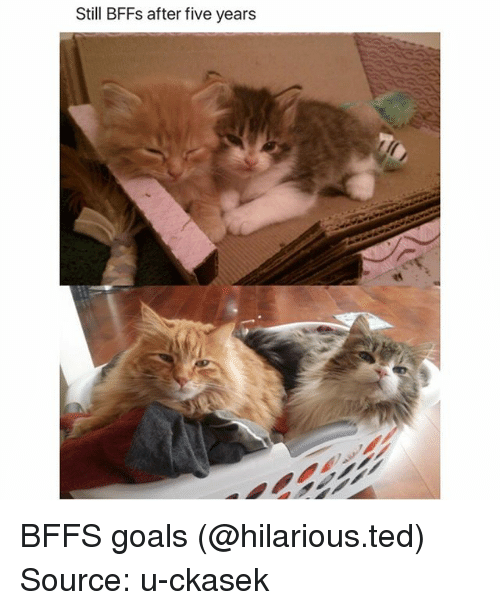 Funny, Goals, and Ted: Still BFFs after five years BFFS goals (@hilarious.ted) Source: u-ckasek