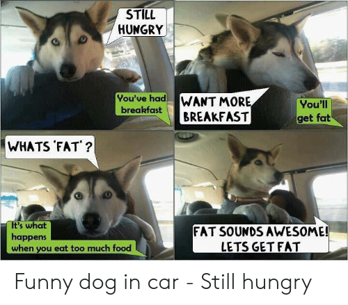 Funny Hungry Memes: STILL  HUNGRY  You've had  WANT MORE  BREAKFAST  You'll  breakfast  get fat  WHATS FAT ?  It's what  happens  when you eat too much food  FAT SOUNDS AWESOME!  LETS GET FAT Funny dog in car - Still hungry