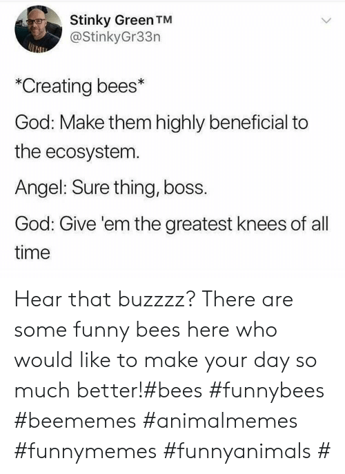 stinky: Stinky Green TM  @StinkyGr33n  *Creating bees*  God: Make them highly beneficial to  the ecosystem.  Angel: Sure thing, boss.  God: Give 'em the greatest knees of all  time Hear that buzzzz? There are some funny bees here who would like to make your day so much better!#bees #funnybees #beememes #animalmemes #funnymemes #funnyanimals #