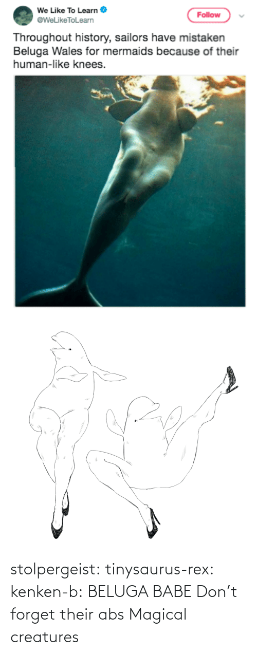 Rex: stolpergeist: tinysaurus-rex:  kenken-b: BELUGA BABE Don't forget their abs  Magical creatures