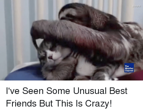 The Weather Channel: Stonyul  The  Weather  Channel I've Seen Some Unusual Best Friends But This Is Crazy!