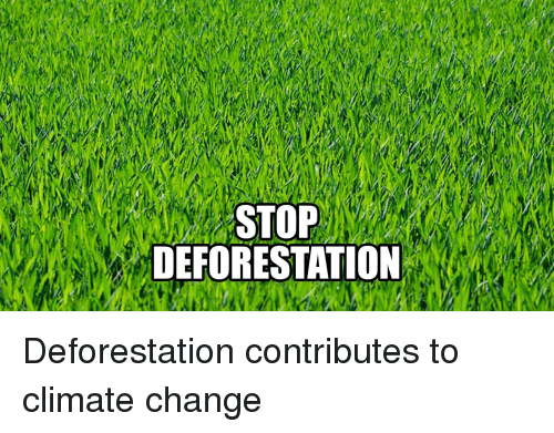 how to help stop deforestation