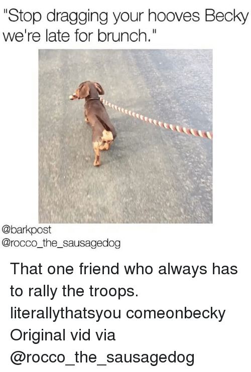 "Memes, 🤖, and Who: ""Stop dragging your hooves Becky  we're late for brunch.""  @bark post  Cirocco the sausagedog That one friend who always has to rally the troops. literallythatsyou comeonbecky Original vid via @rocco_the_sausagedog"