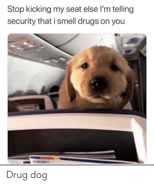 seat: Stop kicking my seat else l'm telling  security that i smell drugs on you  W451-68/1T Drug dog