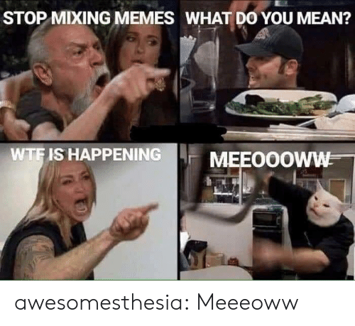 Mixing: STOP MIXING MEMES WHAT DO YOU MEAN?  WTF IS HAPPENING  MEEOOOWW awesomesthesia:  Meeeoww