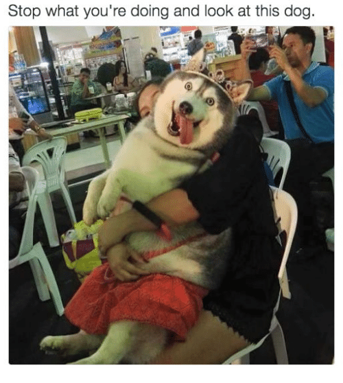 Look At This Dog: Stop what you're doing and look at this dog