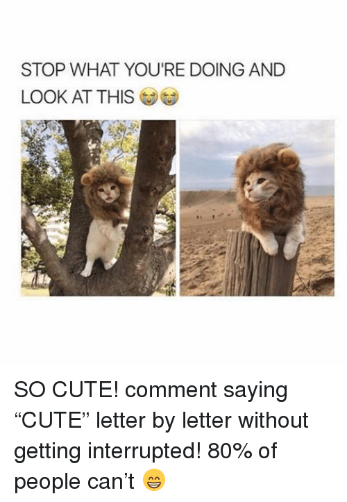 "Memes, 🤖, and So Cute: STOP WHAT YOU'RE DOING AND  LOOK AT THIS SO CUTE! comment saying ""CUTE"" letter by letter without getting interrupted! 80% of people can't 😁"