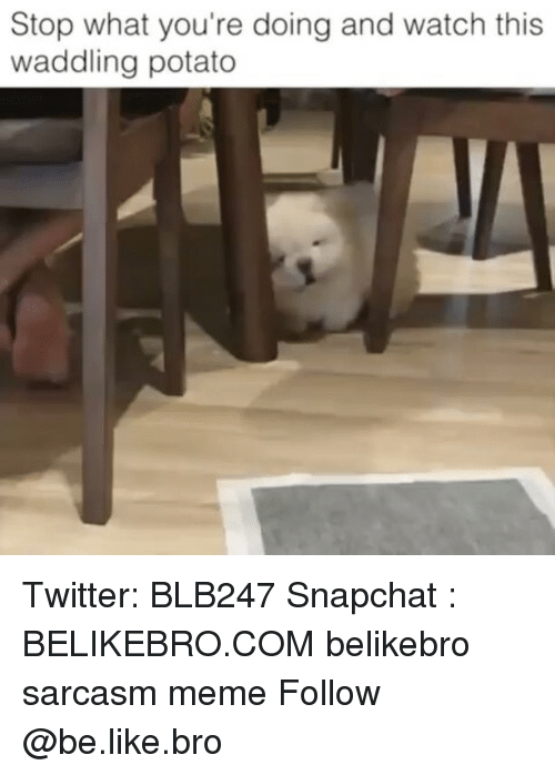 Be Like, Meme, and Memes: Stop what you're doing and watch this  waddling potato Twitter: BLB247 Snapchat : BELIKEBRO.COM belikebro sarcasm meme Follow @be.like.bro