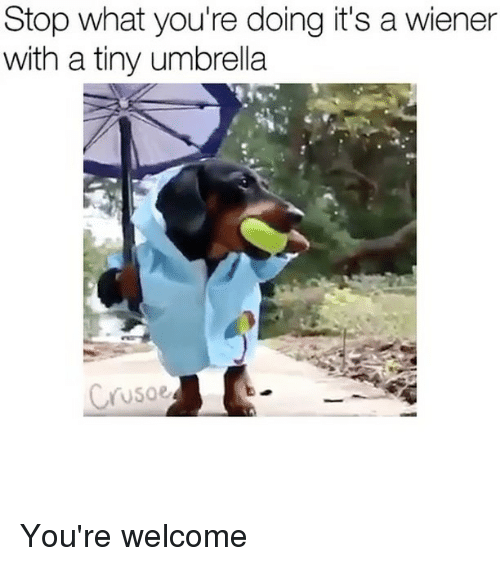 Memes, 🤖, and Tiny: Stop what you're doing it's a wiener  with a tiny umbrella  Soe You're welcome