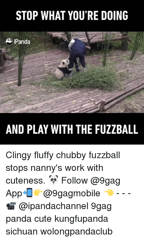 9gag, Cute, and Memes: STOP WHAT YOU'RE DOING  & Panda  AND PLAY WITH THE FUZZBALL Clingy fluffy chubby fuzzball stops nanny's work with cuteness. 🐼 Follow @9gag App📲👉@9gagmobile 👈 - - - 📹 @ipandachannel 9gag panda cute kungfupanda sichuan wolongpandaclub