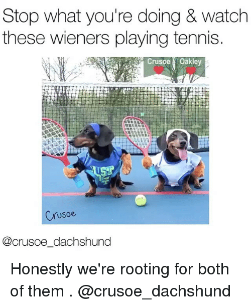 Memes, Tennis, and Watch: Stop what you're doing & watch  these wieners playing tennis.  Crusoe Oakley  Crusoe  @crusoe dachshund Honestly we're rooting for both of them . @crusoe_dachshund