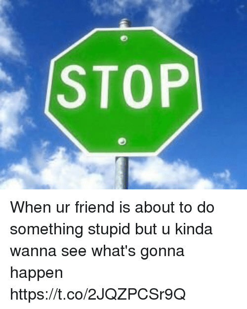 Girl Memes, Friend, and Whats: STOP When ur friend is about to do something stupid but u kinda wanna see what's gonna happen https://t.co/2JQZPCSr9Q